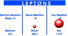 Leptons.png